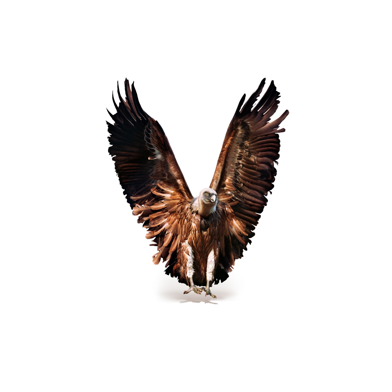 V_Vulture